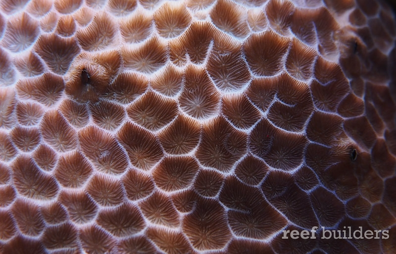 home-corals-26