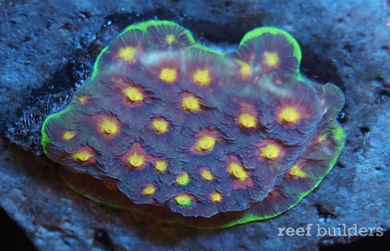 home-corals-3