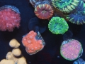 home-corals-2