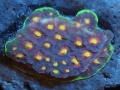 home-corals-3