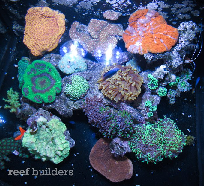 rss ai nano led pictured over live corals and mini reef. Black Bedroom Furniture Sets. Home Design Ideas