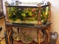 vintage-fishbowl-zoomed-2