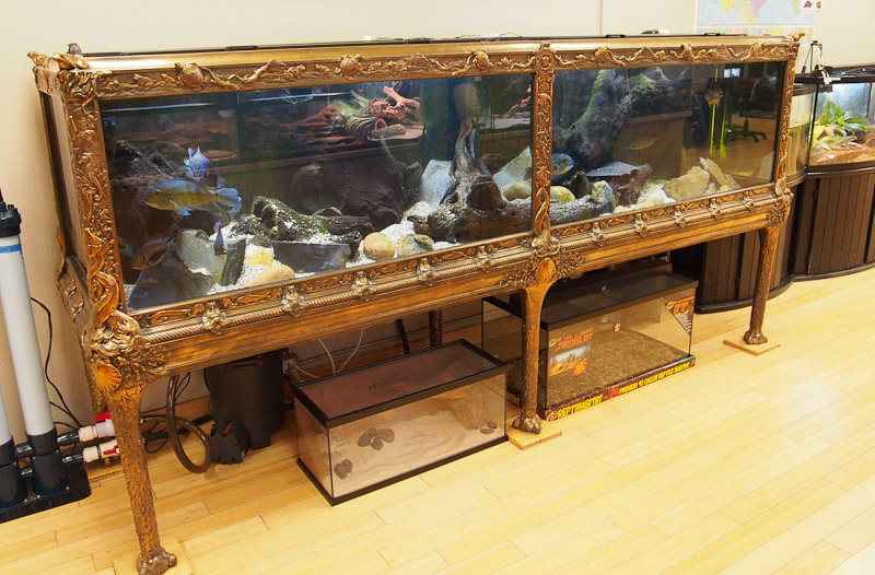 zoo med is the guardian of an amazing aquarium museum