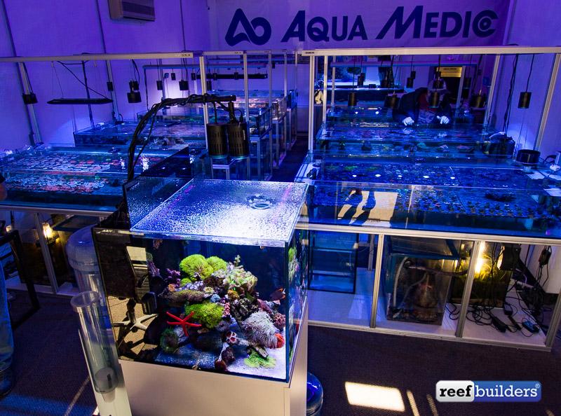 aquamedic-cubicus-reef-tank-6
