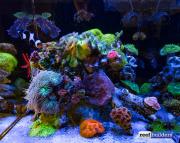 aquamedic-cubicus-reef-tank-1
