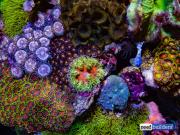 aquamedic-cubicus-reef-tank-10