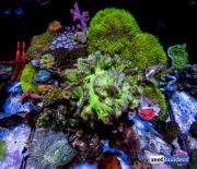 aquamedic-cubicus-reef-tank-7