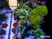 aquamedic-cubicus-reef-tank-8