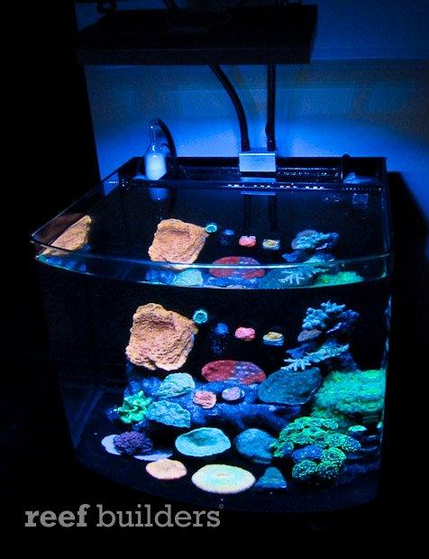 aivega-led-aquarium