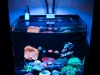 aivega-led-aquarium-5
