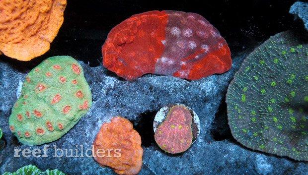 aivega-led-coral-7