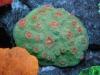 aivega-led-coral-2