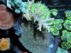 aivega-led-coral-6