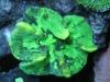 aivega-led-coral