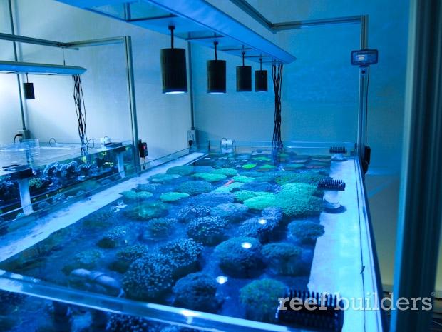 kessil led aquaspacelight