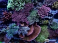 reef-aquarium-display-aquatic-art-1