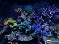 reef-aquarium-display-aquatic-art-11