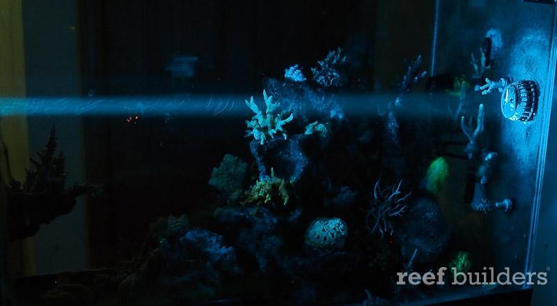 azurelite-led-flashlight