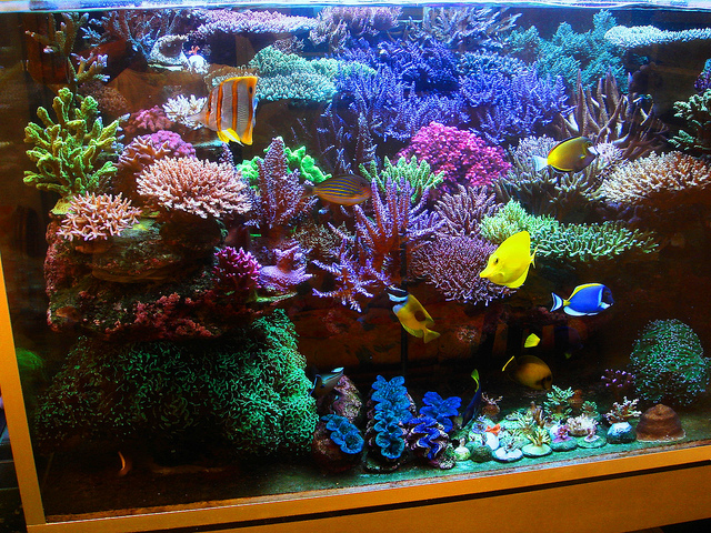 Carlinhos Moreno S 400g Reef Rom Brazil Is Complete Coral