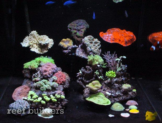 neotherm-cobalt-aquatics