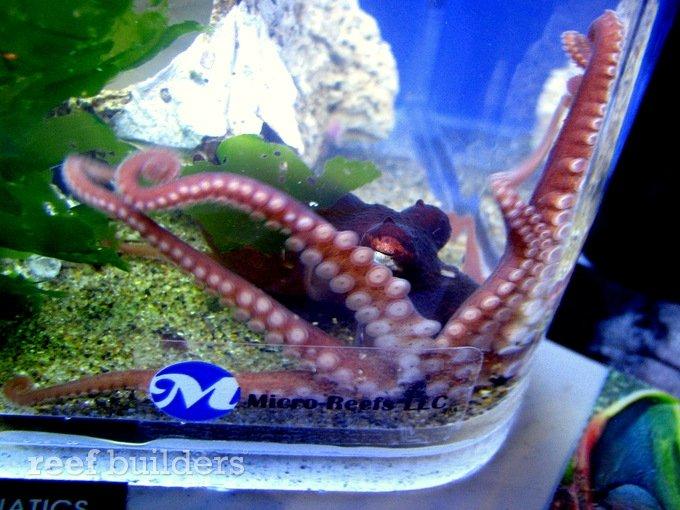 Micro-reefs Coldwater marine aquatics