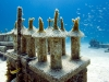 fl-coral-nursery-photo-080710h