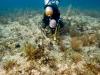 fl-coral-nursery-photo-080710c