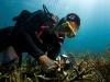 fl-coral-nursery-photo-080710o
