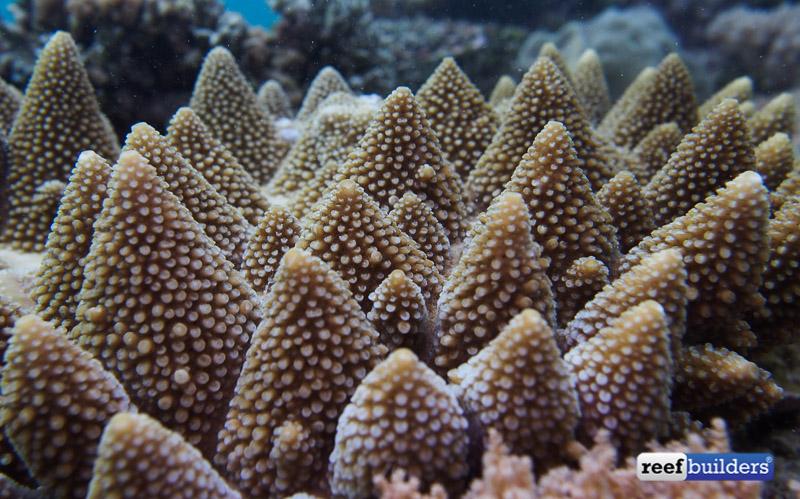 philippines stony soft corals-1.jpg