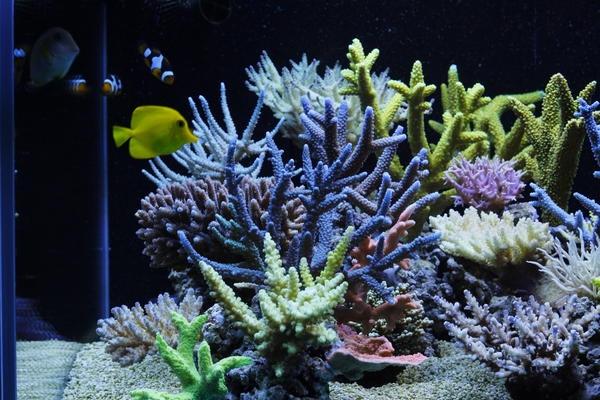 dakkang-reef-2