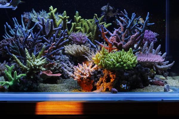 dakkang-reef-5