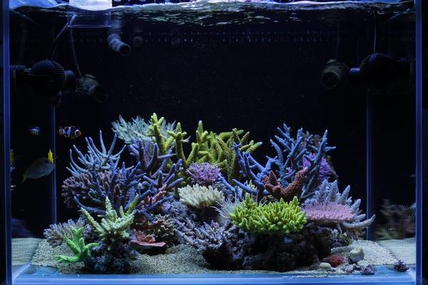 dakkang-reef