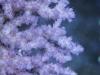 dakkang-reef-coral-5