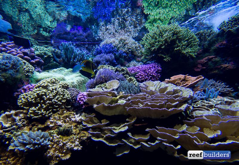 maintenance of a marine aquarium