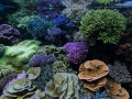 denver-aquarium-reef-tank-11