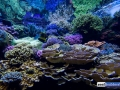 denver-aquarium-reef-tank-3