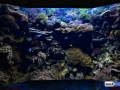 denver-aquarium-reef-tank-4