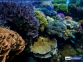 denver-aquarium-reef-tank-6