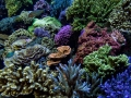 denver-aquarium-reef-tank-8