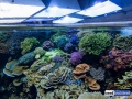 denver-aquarium-reef-tank-9