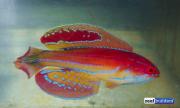 paracheilinus-attenuatus-6