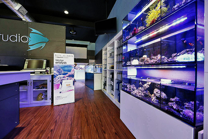 Elos aquastudio new york grand opening reveals a gorgeous for Salt water fish store