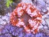 flower anemone 7