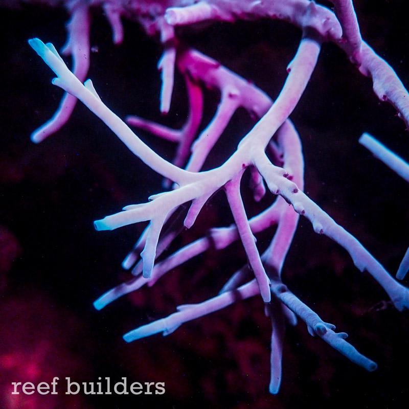 fluorescent-coral=night-dive-2