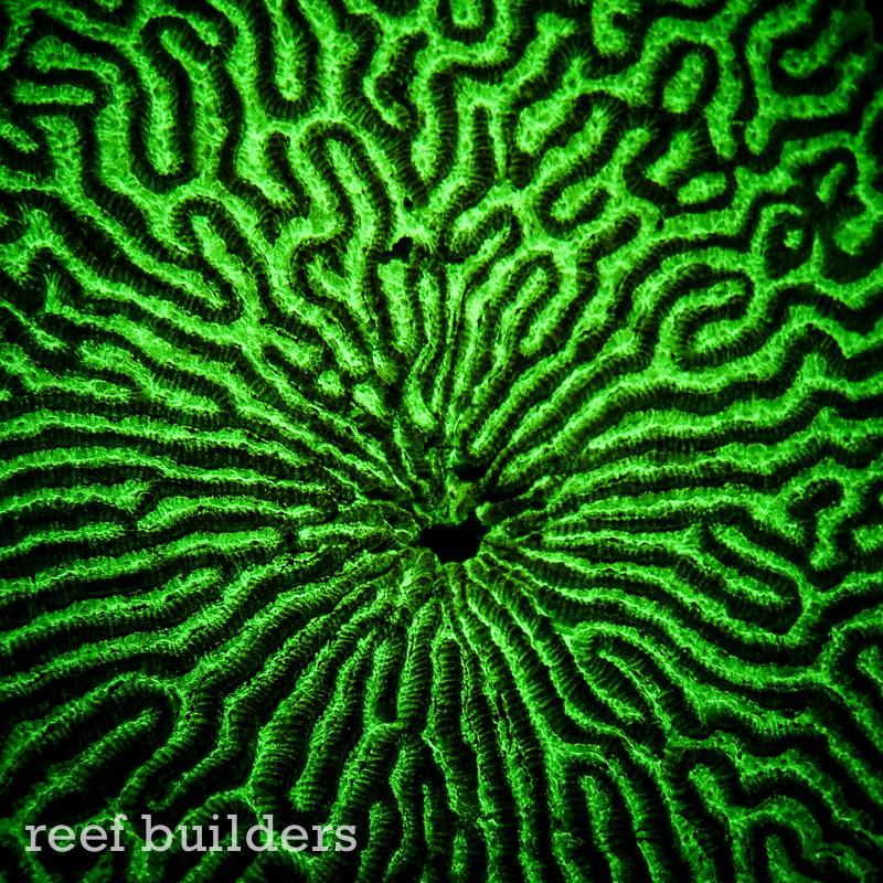 fluorescent-coral=night-dive-6