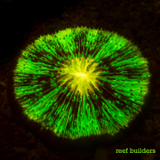 fluorescent corals-1