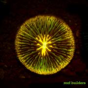 fluorescent corals-15