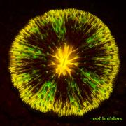 fluorescent corals-17