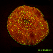 fluorescent corals-18