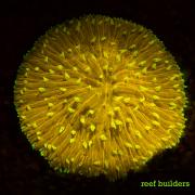 fluorescent corals-4